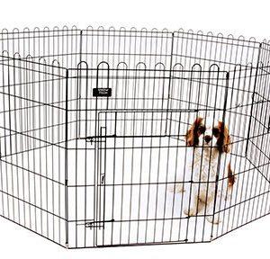 recinto cuccioli