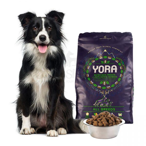 Yora Dog Adult